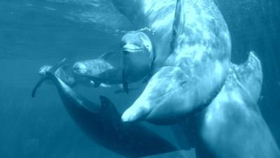 tercera_cria_delfin_zoo_aquarium_de_madrid_1