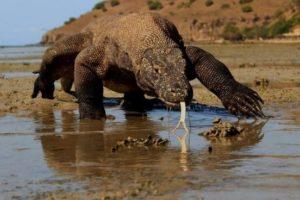 Proyecto Dragón de Komodo