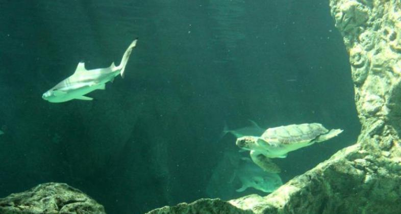zoo-aquarium-madrid-tortugas-careta-csic_2